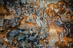 Plastered damaged grunge wall Stock Photography