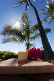 Plasterek lilikoi cheesecake na pięknym Hawajskim dniu Zdjęcie Stock
