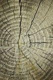 plasterka szalunku drewno Obraz Stock