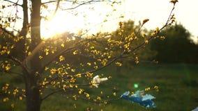 Plastic afval op de takken van een boom Close-up van een de lenteboom bij zonsondergang, in de stralen van de zon Eindeplastiek stock video