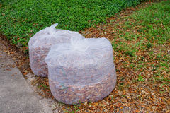 Plastic bag collecting leaves Royalty Free Stock Image