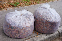 Plastic bag collecting leaves Royalty Free Stock Photography