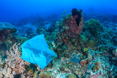 Plastic bag on coral reef Stock Image