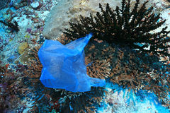 Plastic bag on corals. In the tropical coral reef of the indian ocean stock photography