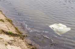 Plastic bag in dirty water Royalty Free Stock Image