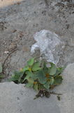 Plastic bag drop on ground Stock Image