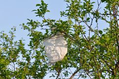 Plastic bag hanging of a tree branch. Close up plastic bag hanging of a tree branch. Waste and garbage Stock Photography