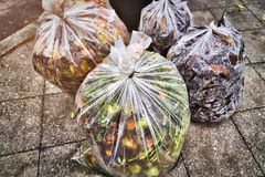 Plastic bag with plant waste. In autumn Stock Photos