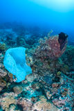 Plastic bag pollutes a coral reef Stock Photography