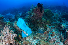 Plastic bag pollutes a coral reef Royalty Free Stock Photo