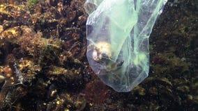 Plastic bag in the sea, killer crabs. Plastic debris, pollution, death of aquatic animals. Black Sea stock footage