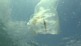 Plastic bag in the sea, killing shrimp. Plastic trash, pollution