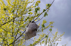 Plastic bag in a tree Stock Images