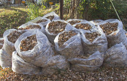 Plastic Bags of Autumn Leaves Royalty Free Stock Photo