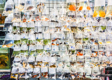 Plastic bags of fishes for sale Stock Photos