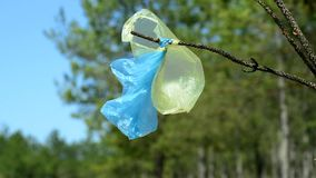 Plastic bags hang on a branch in the middle of the forest. A summer day stock footage