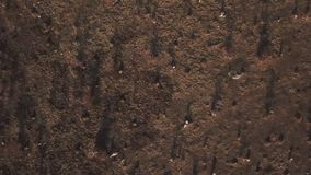 Plastic bags on the lawn. In bird`s-eye view stock video footage