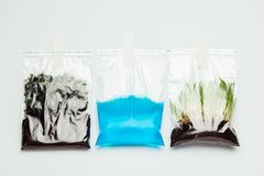 Plastic bags with soil, water and seedling hanging. Isolated on white, earth day concept royalty free stock photo