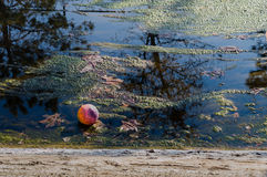 Plastic ball in a pond covered up by green moss Royalty Free Stock Photography