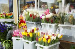 Plastic baskets with bouquets of tulips Stock Images