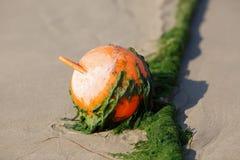 Plastic beach buoy Royalty Free Stock Photo