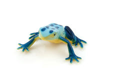 Plastic blue frog toy Royalty Free Stock Photo