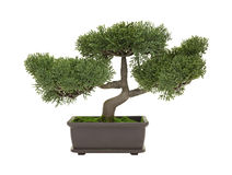 Plastic bonsai tree isolated on a white background Royalty Free Stock Photo