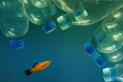 Free Plastic Bottle And Fish. Plastic Bottles In Ocean Contaminates Environment Royalty Free Stock Photos - 173931318