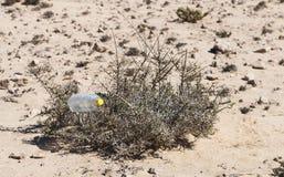 Plastic Bottle In Bush, Fuerteventura Royalty Free Stock Photo