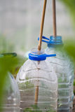 Plastic bottle cloche Royalty Free Stock Photography