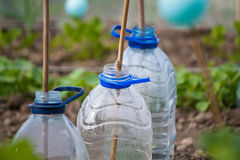 Plastic bottle cloches Royalty Free Stock Photography