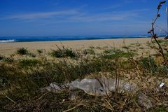 Plastic bottle sea pollution on sandy beach vegetation ecosystem  in south of italy. Plastic bottle garbage sea pollution on sandy beach vegetation ecosystem in stock photo
