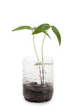 Plastic bottle and Sprout Stock Images