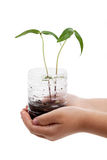 Plastic bottle and Sprout. With white background Royalty Free Stock Images