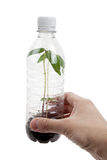 Plastic bottle and Sprout Royalty Free Stock Photo