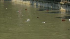 Plastic Bottles Floating In City River stock video footage