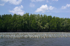 Plastic bottles floating on the river near mangrove forest Royalty Free Stock Images