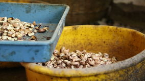 Plastic bowls filled with cashew nuts. stock footage