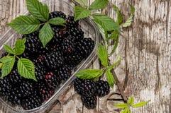 Plastic Box with fresh Blackberries Stock Photos