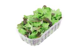 Plastic box full of lettuce salad. Royalty Free Stock Image