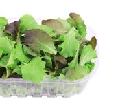 Plastic box full of lettuce salad. Royalty Free Stock Photo