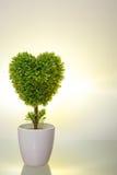 Plastic bush and ceramic pot Royalty Free Stock Image