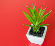 Plastic bush tree in a ceramic planter Stock Images