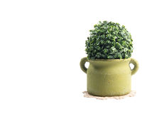 Plastic bush tree. Isolated over white with clipping path royalty free stock photo