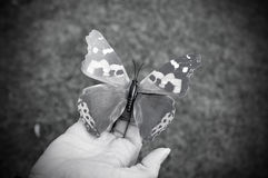 Plastic butterfly on hand Stock Photos