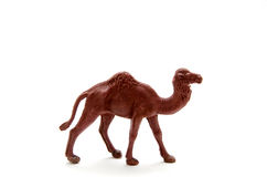 Plastic camel. Foreground isolated white background Royalty Free Stock Photo