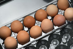 A plastic carton of fresh organic brown free range eggs Royalty Free Stock Image