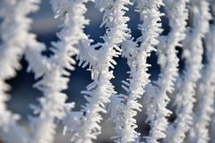 Plastic-coated wire fence covered with hoarfrost. Royalty Free Stock Image