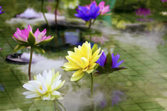 Plastic colorful decoration lotus in pond,Taipei Stock Photos