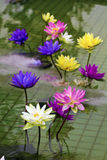Plastic colorful decoration lotus in pond,Taipei Stock Photo